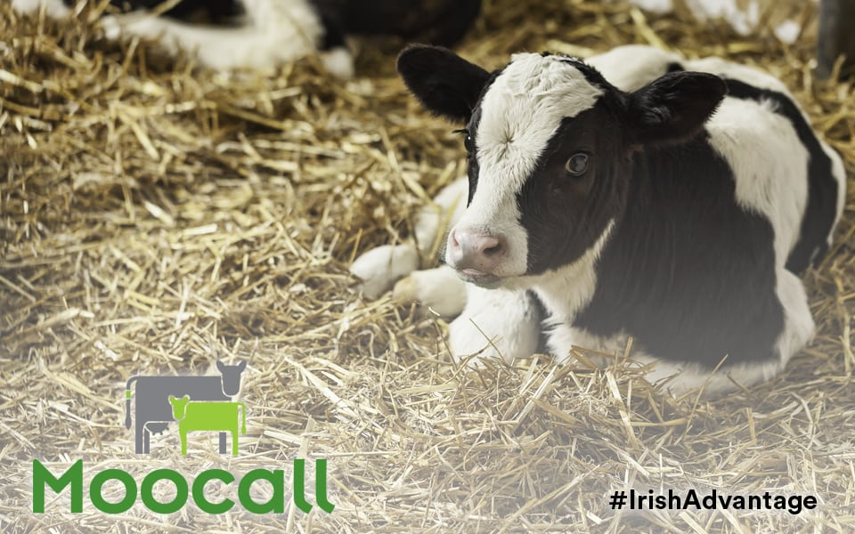 Moocall: What happens when nature meets technology - Agritech - Irish Advantage